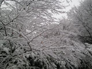 雪、降ってます|川崎市の植木屋