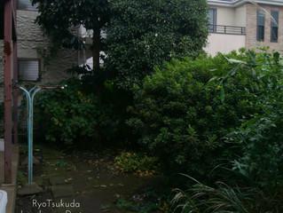 お庭のお手入れ:川崎市の植木屋つくだ