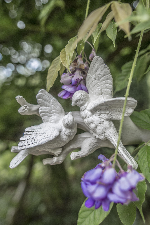 Acanthus Garden-44