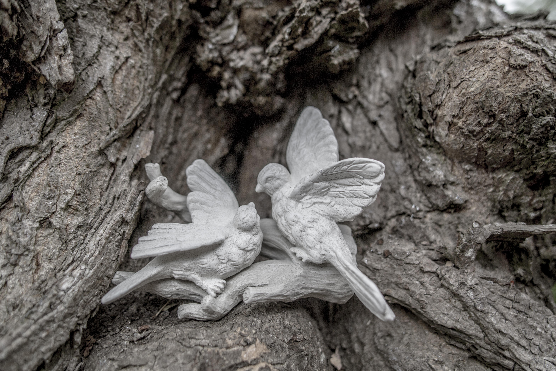 Acanthus Garden-41