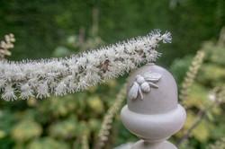Acanthus Garden-12