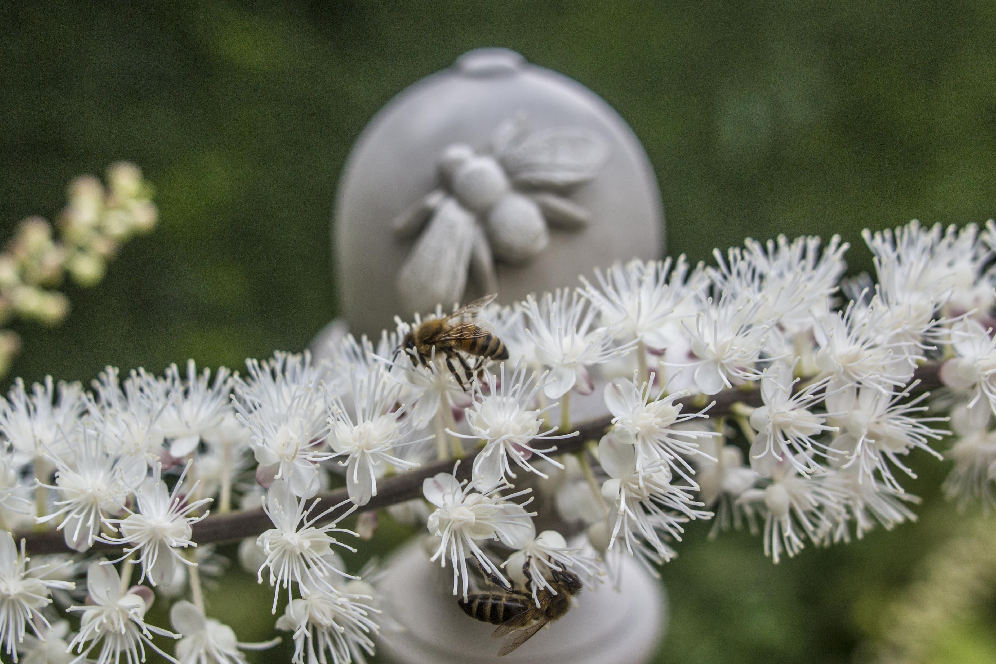Acanthus Garden-13