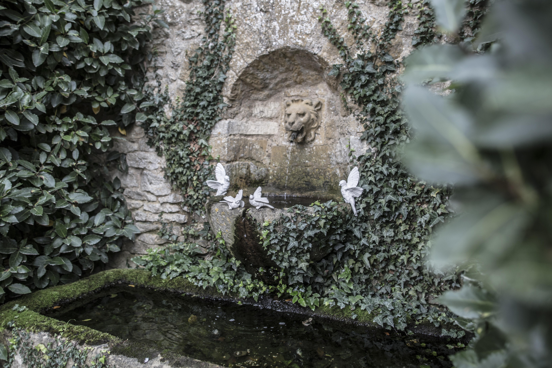 Acanthus Garden-59