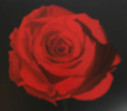 A realistic oil painting of a red rose
