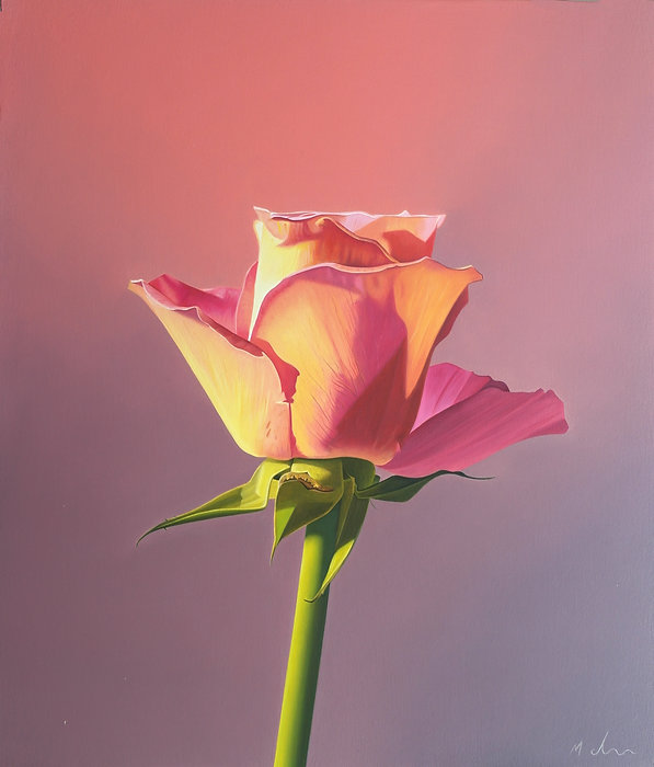 A photo realistic oil painting of a pink rose