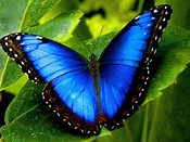 BUTTERFLIES at Prosperity Mansion - Maryland's premier outdoor / garden wedding and events venue