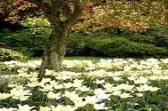 Mansion Wedding Venue - Outdoor / Garden Wedding Reception in Westminster / Frederick Maryland