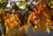 autumnleaves2019.jpg
