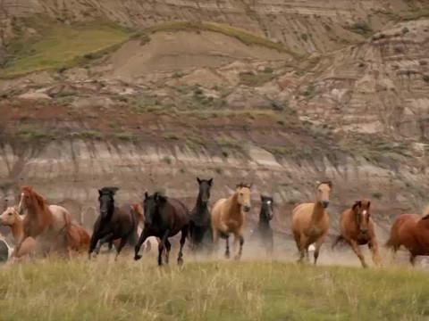 caballos.mp4