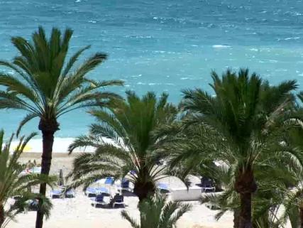 bluesense palmeras.mp4
