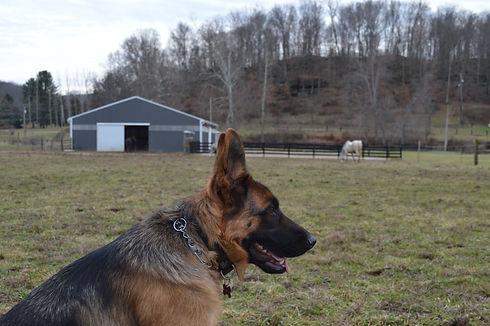 dog in training.jpg