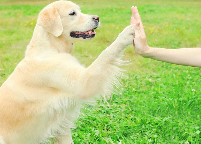 trained dog.jpg
