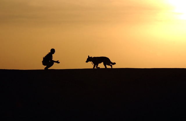 dog-trainer-silhouettes-sunset-38284