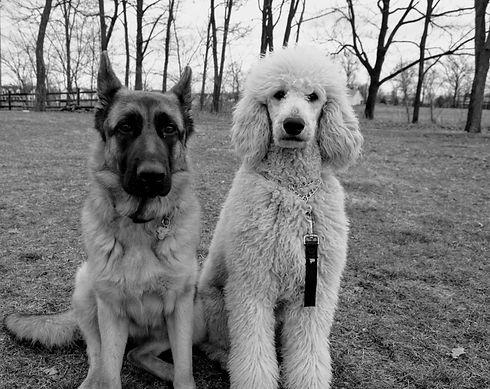 personal dog training.jpg