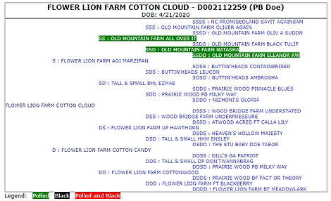 Cotton Cloud ped.PNG