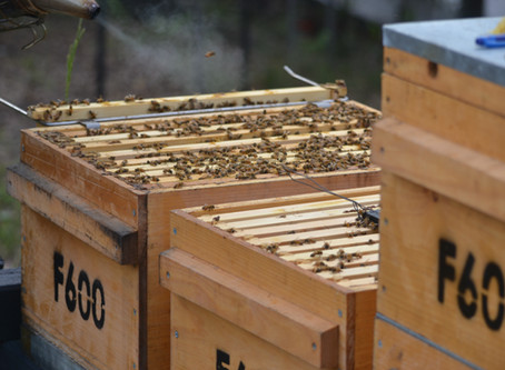 7 Steps to Owning Your Own Beehive!