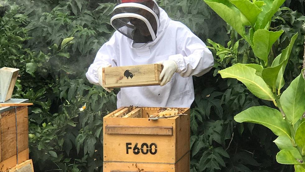 Hive Management Class