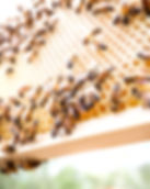 Greenwood Farm Bees, Hives and Classes