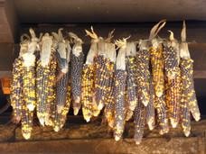 El sagrado maíz