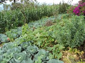 Diversificación de cultivos en parcelas familiares