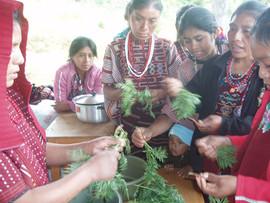 Uso de plantas medicinales