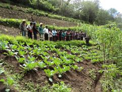 Visitas a las parcelas de las familias que trabajan Agroecología