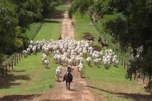 Fazenda de gado 3.jpg