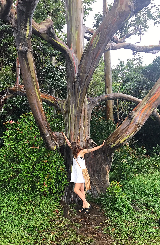 Painted Trees on the Road to Hana (Rainbow Eucalyptus)