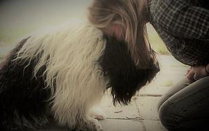 Kwisplkracht training, werken met je eigen hond in je praktijk