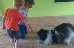 AAT Animal Assisted Therapy, DOI, AAI