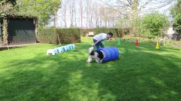 Kwispelkracht training voor kindertherapeuten