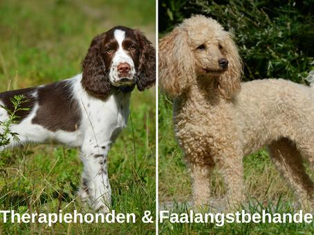 Hoe therapiehonden faalangst kunnen verhelpen