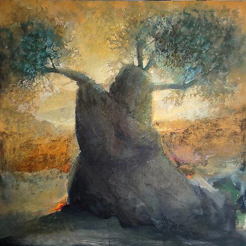 The Ancient Olive Tree Of Myltiades