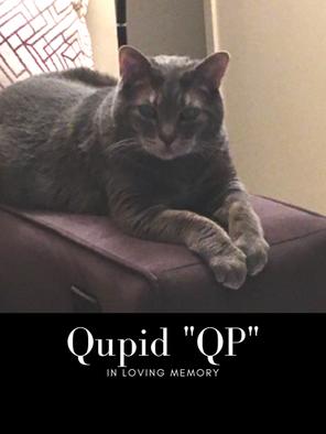 qupid edit pic.png