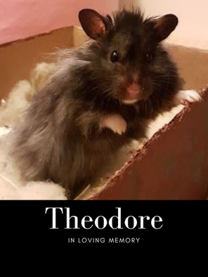 Theodore edit pic.png