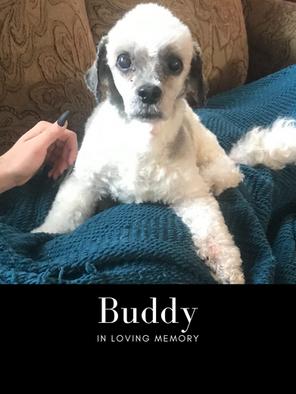 buddy edit pic.png