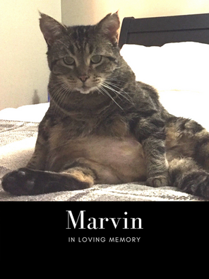 Marvin edit pic.png