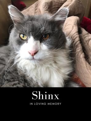 Shinx.png