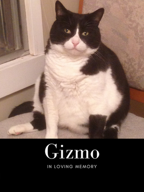 gizmo pic.png