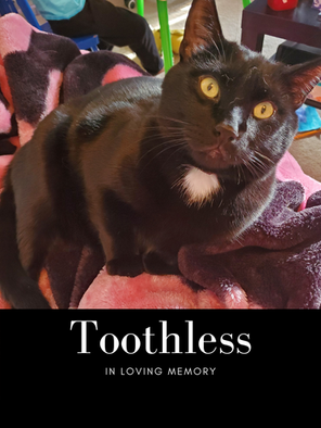 toothless pic.png