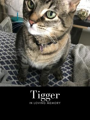 tigger edit pic.png