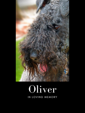 oliver edit print.png