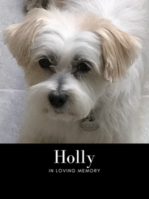 Holly edit pic.png