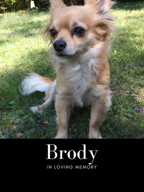 Brody pic.png