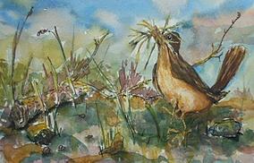Barbara McGeachen, Spring Robin