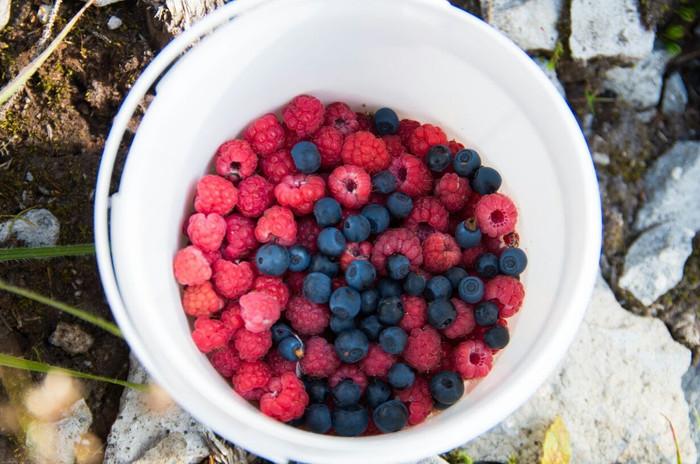 transylvania fruits_visit transylvania.j