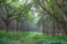 Trail-through-woods.jpg