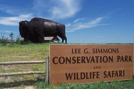 Wildlife Safari sign with Buffalo Croppe