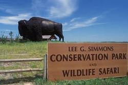 Wildlife Safari sign with Buffalo Croppe