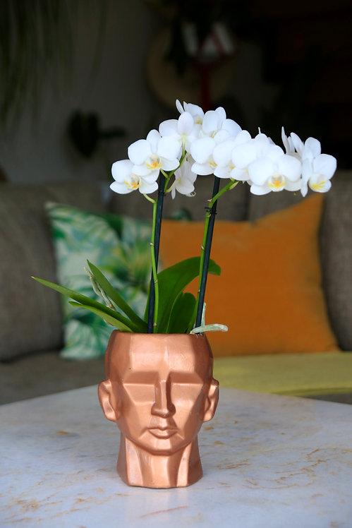 Orquidea Mini